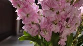 orchidea : Tracking shot of beautiful pink flowers plants in green vintage vase. Greenery nature, garden and decoration concepts.