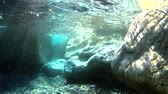 caracol : Light underwater, stone and wild Stock Footage