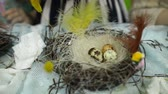 髪型 : Children make a nest for birds, nest for birds 動画素材