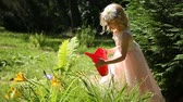 kleine kinder : Little girl watering flowers in a garden from a watering can Videos