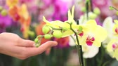 beslemek : flower garden, woman hand touching an orchid Stok Video