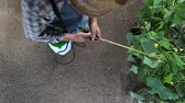farmer working in vegetable garden, pesticide sprays on plants, top view and copy space template.