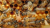 uniqueness : The queen bee surrounded by bees: that support and feed