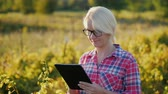 sem fio : A female farmer working with a tablet in the field. Worth about the vineyard Vídeos