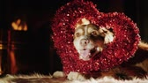 родословная : The dog looks through the decorative heart. It lies near the fireplace. Celebrating Denb St. Valentines Day together