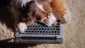 księgowa : The dog is dozing on the laptop keyboard. Concept - too much work. Top view Wideo