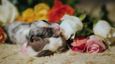 sheepdog : Two newborn puppies lie near a bouquet of flowers
