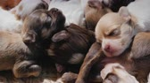 pooch : A group of newborn puppies sleeps sweetly on each other. Warmth and comfort concept