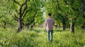handle : A young farmer with a hand braid walks through the apple orchard, rear view