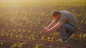 výhonky : The farmer pictures young shoots on the field. Uses a smartphone. Technology in agribusiness