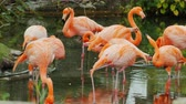tropikal : Graceful pink flamingos. A flock of beautiful pink birds