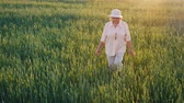 gathering : An elderly female farmer is walking along a field of green wheat. Hands touching the spikelets. Steadicam shot