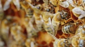 bijenkorf : Colony of bees at work in the hive. Useful Products and Alternative Medicine Concept. 4K 10 bit video