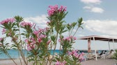 ginásio : A comfortable beach by the sea, in the foreground there are beautiful flowers. Rest by the sea