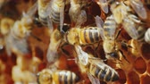 нектар : The bees are working inside the hive. Useful food and traditional medicine. Macro shot