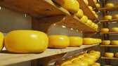 drying rack : Several shelves with beautiful heads of Dutch cheese