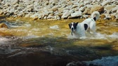 timid : A dog tries to swim across the stormy waters of a mountain river
