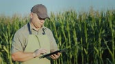 comprimidos : A middle-aged farmer working in a field with a tablet against a background of high shoots of corn
