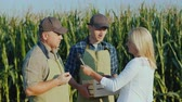 journalist : A reporter with a microphone records interviews with two farmers. Stand in the field against the background of high corn