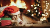 temas animais : Shepherd in a festive cap sweetly dozing by the burning fireplace. Near it lies a crust with a gift Vídeos