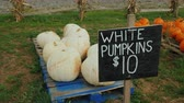 te koop bord : Counter with white pumpkins. Trade at a small agricultural fair Stockvideo