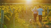vinařství : Young couple with glasses of wine in their hands walking through the vineyard, their dog runs after them. Private tasting and tourism concept