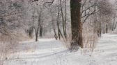 sanki : The path in the winter forest, the camera is moving, the view from the first person Wideo