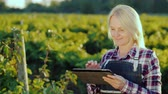digitální tablet : A satisfied female farmer uses a tablet near his garden. Evening before sunset