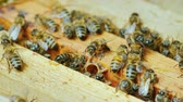 нектар : A large hive of bees is working together to collect honey in the garden