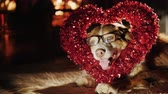 feliciteren : A cute shepherd in glasses sits with a heart-shaped decoration