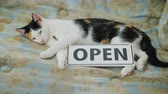 huisdieren : The cat is napping near the sign that says Open.