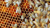 нектар : Useful food and traditional medicine - bees are working inside the hive