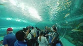 토론토 : Toronto, Canada, October 2017: A group of people in a glass tunnel looking at underwater inhabitants. Ripleys Aquarium