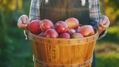 appel : A bountiful harvest from a home garden - a farmer holds a basket of ripe red apples