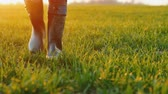 plântula : The feet of a farmer in rubber boots are walking along a green field of wheat. Stock Footage