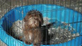 A small dog is sitting in a cage. Transportation and quarantine of animals Stock mozgókép