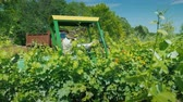 wijn druiven : Wilson, NY, USA, July 2019: Side view of Farmer on a small tractor with additional equipment processes the vine of the grapes with herbicides Stockvideo
