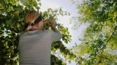 lindeboom : Rear view of Woman picks linden flowers from a tree. Collection of medicinal plants Stockvideo