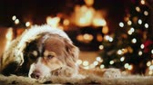 aconchegante : The dog is warming by the fireplace next to the Christmas tree. Christmas and winter holidays concept