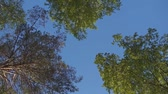 supine : Spinning trees on a blue sky background