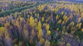 Yellow and Green Forest in Autumn. Green spruce and yellow birch in autumn woods visible from above. Drone flying over the forest. Nature in Northern Europe
