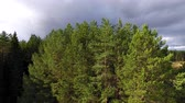 Camera Rises Vertically above Forest. Drone with camera flies up vertically parallel to the trunks of pine trees. Initially seen only pine, but then overlooks the forest, the sky and the river