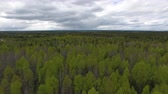 Flying over Forest in Cloudy Weather. Video shoot with the copter flying over the trees in the forest in early summer. Forest grows in the North Stok Video