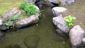 small pond in a quiet japanese garden