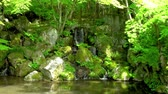 creek waterfall between ferns and mossy rocks in a zen temple garden