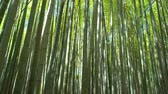 green bamboo forest in the daylight, tracking shot Vídeos