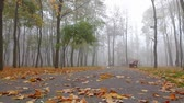 baixo ângulo : fog, autumn, people walk along an alley in a park in the distance. static frame, low angle, full hd, no sound.