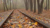 sleepers : fog, autumn, a woman with a stroller walks in the distance in the park, camera movement across the rail from top to bottom, left to right, low angle, full HD, no sound. Stock Footage