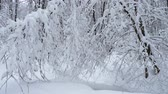 страна чудес : Trees covered with fresh snow in a cold and snowy winter day