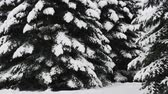 hoarfrost : Snow falling in the winter Christmas scene. Stock Footage